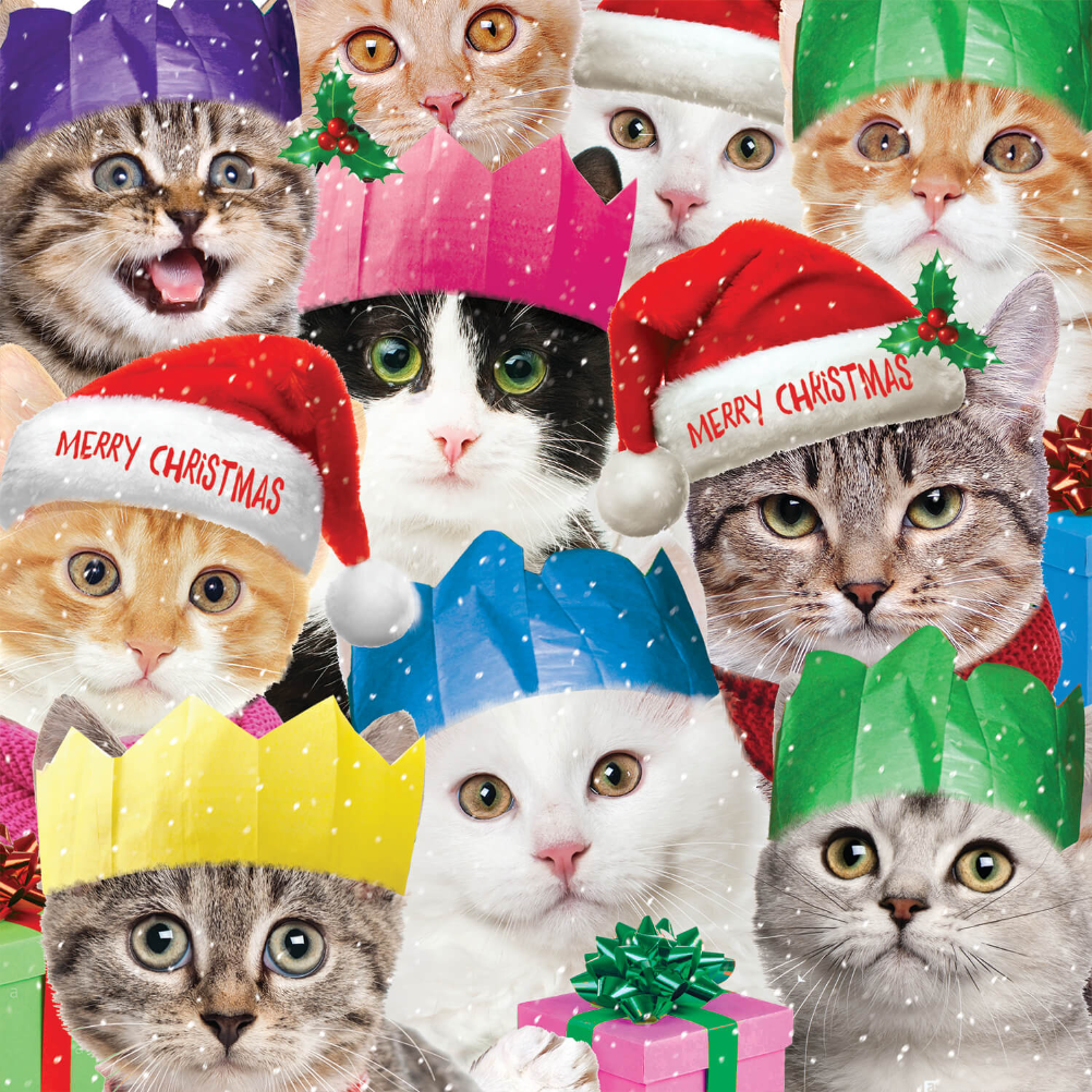 Funny cats , Christmas Card (Free)